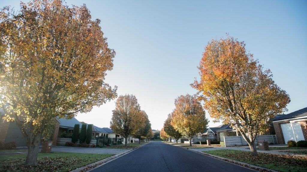 The outer suburbs tend to have better tree coverage than inner-city areas. Photo: Amy Paton