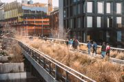 What we can learn about gardening from New York City's The High Line