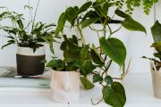 Why Millennials are obsessed with their houseplants
