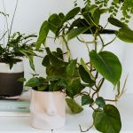 Why everyone under 30 is obsessed with their houseplants