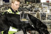 First Person: 'I am Luke Fleury and I'm a detector dog handler'