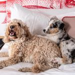 How it's getting easier to take your pet on holiday