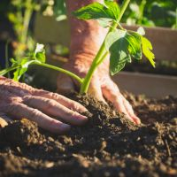 The mental and physical benefits of gardening