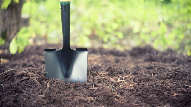 'The biggest mistake people make': Maintaining your garden over winter