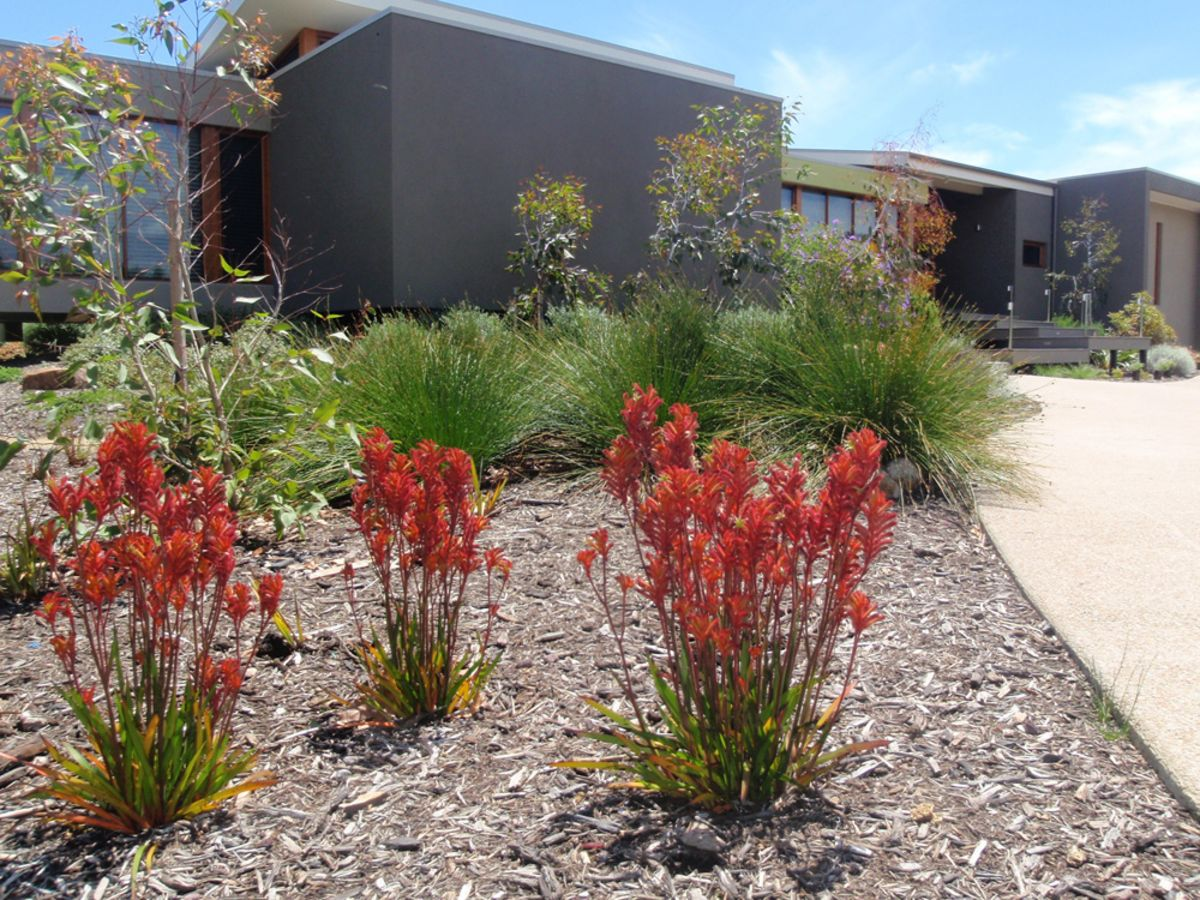 low maintenance and imbued with australian history  the case for native plants in your backyard