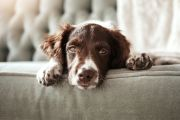 'Don't get me started on the stench': How a dog can lower the value of your home