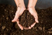 The number one sign there's something wrong with your compost and how to fix it