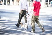 Where to look in Sydney if you're renting and have a pet
