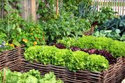 How to create an organic vegetable garden this summer