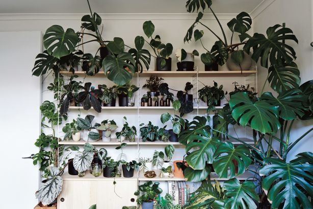 Rather than green walls, we'll see shelves full of greenery, says Chongue. Photo: Armelle Habib and Hardie Grant
