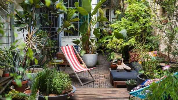 Pot plants make it possible to have a garden which you can take when you leave a rental property. Photo: Daniel Shipp