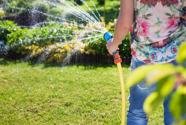 Your plants would certainly love a drink this summer, but which water is best? Photo: Shutterstock