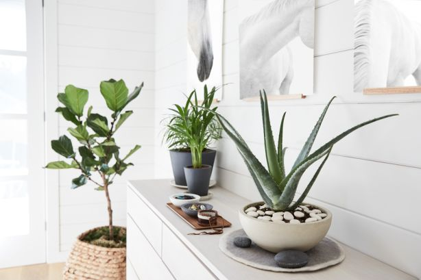 Organic decoration, in the form of plants, were the most abundant in Scandinavian and Chinese living rooms.