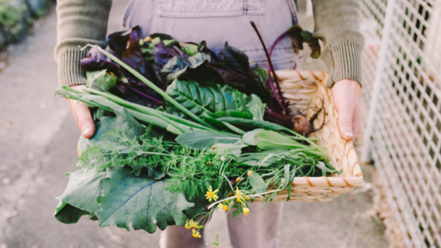 How to design a veggie garden that doesn't look scrappy