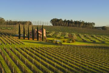 Dreaming of owning a winery? Here's what you need to know before you invest