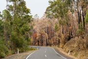 Local journeys to help rebuild Australia's bushfire-affected towns