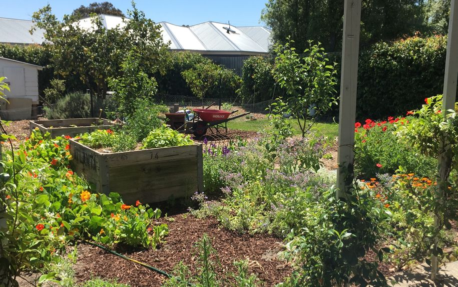 Belong Green Homes_Amy Hunt_Frankston backyard_Garden