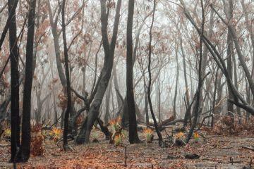 'No easy answers': Bushfire rebuild plans delayed by COVID building boom