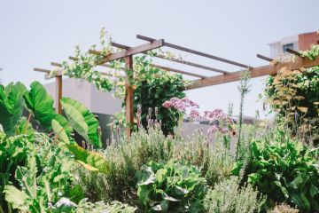 Tips for making sure your garden survives the summer months