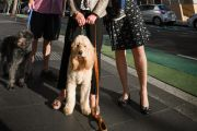 How the fight to get pets allowed in apartment buildings has reached NSW Parliament