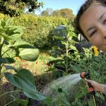 How Amy and David turned their suburban backyard into a thriving food forest