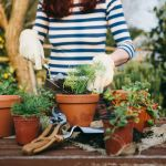 Everything you need to know to start a successful urban garden
