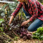 'It's not roquette science': How to cultivate an edible garden