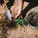 How to prepare your soil to ensure you have a thriving garden