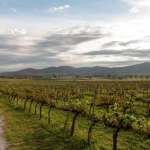 Live the dream: Five wineries for sale right now