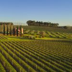 Dreaming of owning a winery? Here's what you need to know first