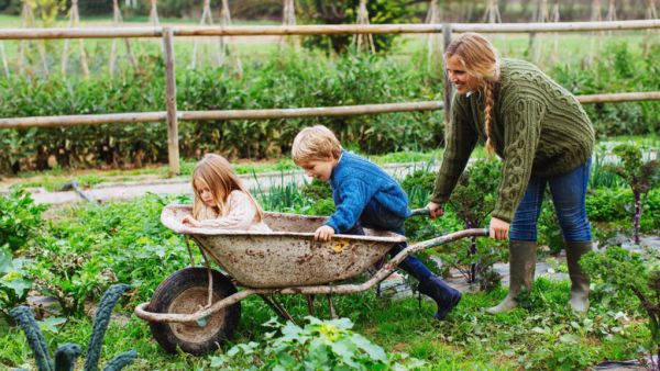Six jobs to do in the garden this winter