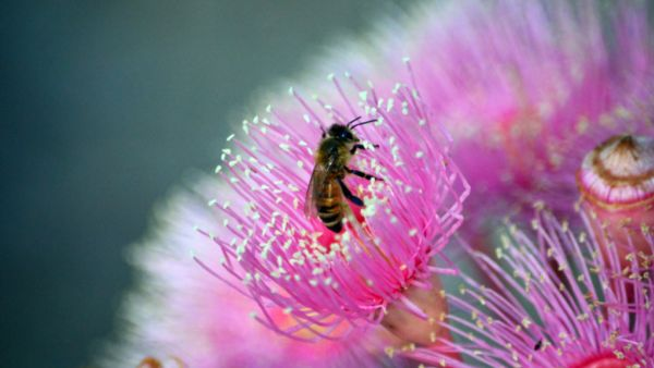 How to attract native bees to your backyard