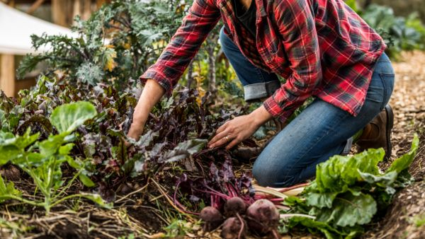 How to kickstart your own edible garden