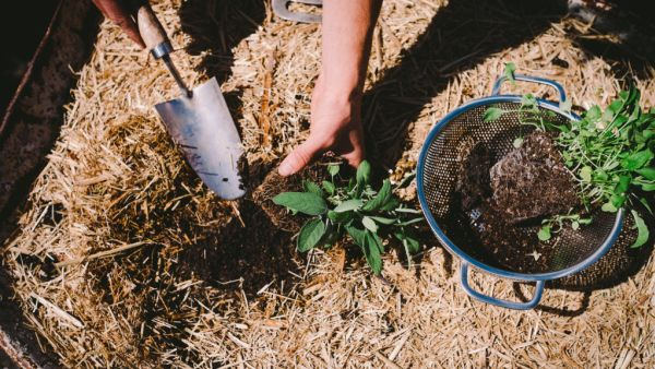 How to prepare your soil to ensure a thriving garden