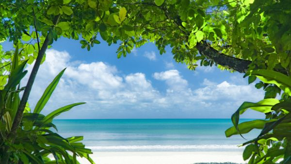 Join the great migration north, work from home at this tropical eco-lodge