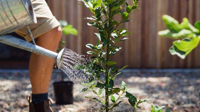 The art of watering your indoor and outdoor plants