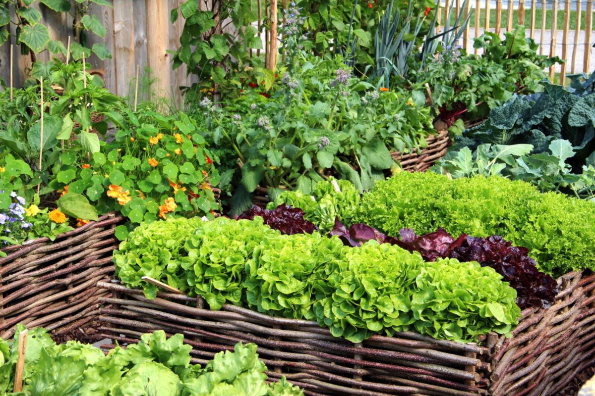 Summer Gardening Guide How To Create An Organic Vegetable