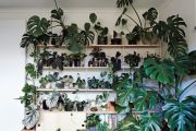 Four questions to ask yourself before you buy an indoor plant
