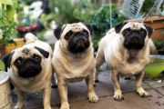 'How many pets do you own?': Bizarre questions banks now ask borrowers