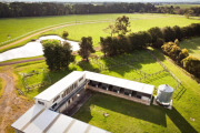 Horse stud owners take a punt on spring auction market