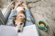 Ten pet-friendly rental properties available in Canberra