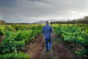 'There's so much to do': The ins and outs of life on a vineyard