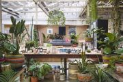 The most important indoor plant trends for 2020