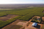 Offshore investors swoop on almond orchards
