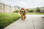 Five easy ways to stop your dog from ruining your backyard or garden