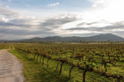Live the dream: Five wineries for sale in Australia