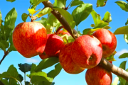 Orange apple orchards hit the market
