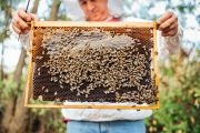 Where to learn the art of beekeeping