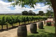 'Absolutely heaving': without international tourists, locals are rediscovering WA's Swan Valley