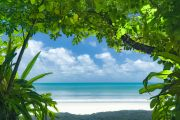 Join the thousands moving to Queensland, work from home at this Cape Tribulation eco-lodge